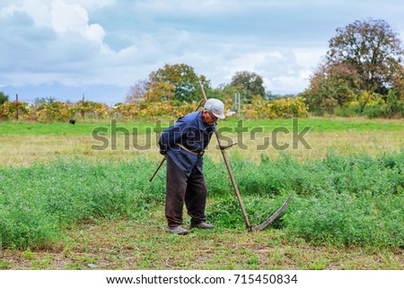 An old man in traditional ukranian clothes mowing grass in a me meadow