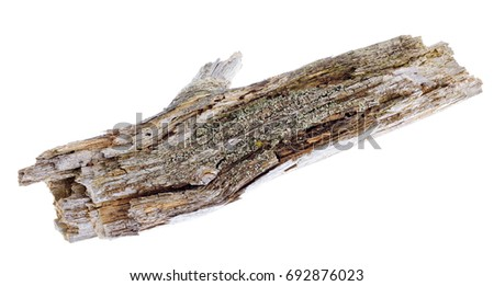 An old mossy Twig isolated on white.