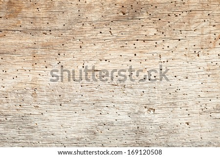 An old oak beam with a number of woodworm holes. - stock photo