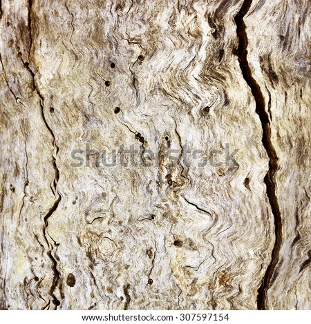 an old tree is a background - stock photo