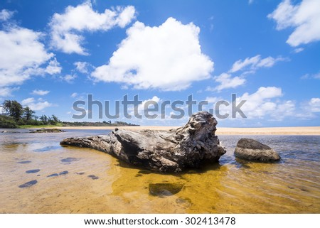 An old tree trunk lies in a shallow pool of seawater on a tropical shoreline in Hawaii - stock photo