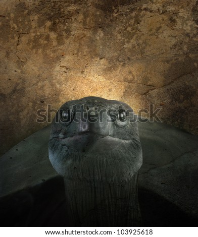 An old turtle is against a textured background. Use it for a zoo or endangered species concept. - stock photo