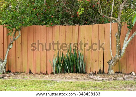 An old uneven wooden stockade fence with citrus trees on either side and snake plant in the middle in Bonita Springs, Florida.