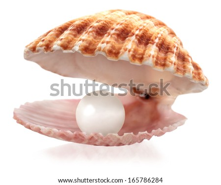 An open seashell with a pearl isolated on white  - stock photo