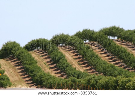 An Orchard on a hill - stock photo