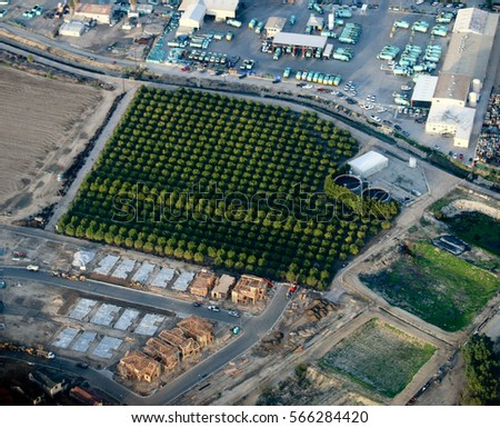An orchard surrounded by industry in Ventura County, California.