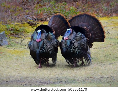An original photograph of two male tom wild turkeys transformed into a colorful painting