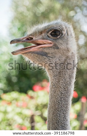 an ostrich head - stock photo