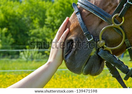 An outstretched hand makes a friendly gesture to a horse by stoking it's head - stock photo