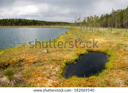 An overgrowing shore of a wilderness lake in Finland - stock photo