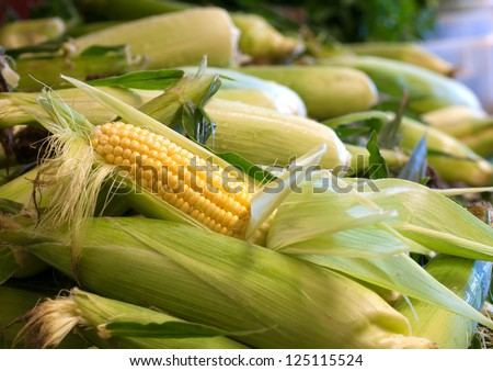 An Partially Shucked Ear of Corn in a Bin of Corn at a Farmers Market - stock photo