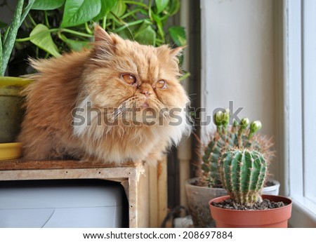 An red cat looking out the window - stock photo