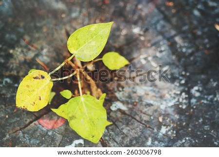 An Stump trees in green water . - stock photo