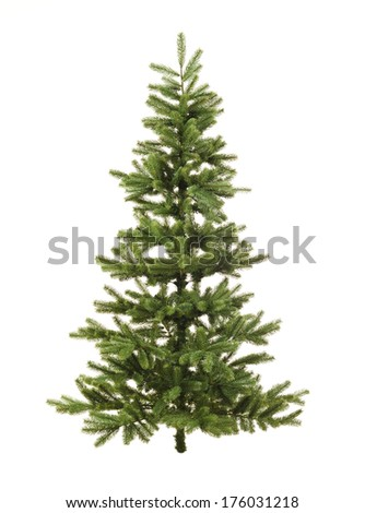 An undecorated coniferous Christmas tree stands by itself. - stock photo
