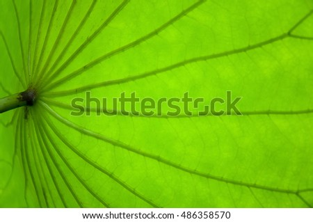 An Underside of a Green Palm Leaf