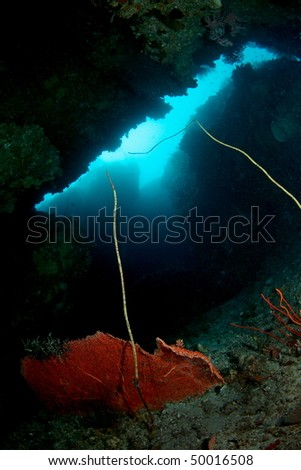 an underwater cave sceneries at Hukurila Beach, Ambon, Indonesia...about 30-40 meters depth - stock photo