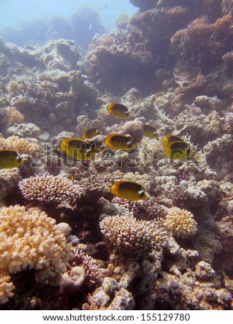 An underwater view with a coral walls, corals and small fishes, Red Sea, Egypt - stock photo