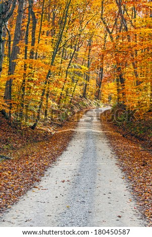 An unpaved gravel road winds through a forest with intensely colorful fall foliage. Shot in Indiana's Brown County.