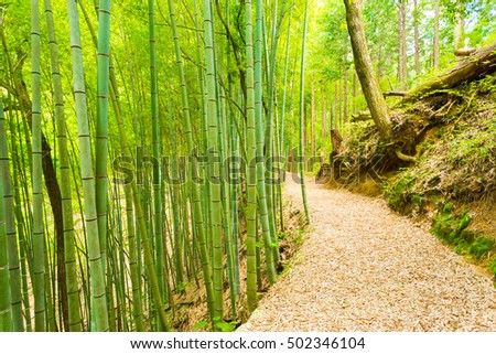 An unused leaf covered bamboo forest road leads to the grounds of Tsumago Castle overlooking the post station town of Tsumago on the Nakasendo Route. Horizontal