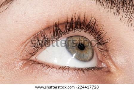 Anathomy of Woman's Grey/green human eye - macro - stock photo
