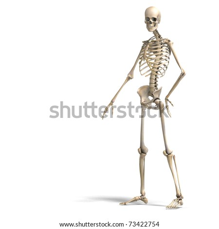 anatomical correct male skeleton. 3D rendering with clipping path and shadow over white