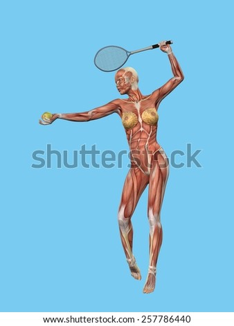 Anatomical front view featuring muscle motion of woman playing tennis.