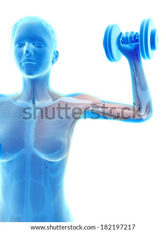anatomical illustration of a woman working out
