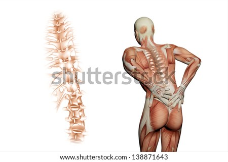 anatomical vision back pain. 3D rendering.