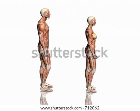 Anatomically correct medical model of the human body, man and woman with muscles showing.  3D illustration, render over white. View from left.