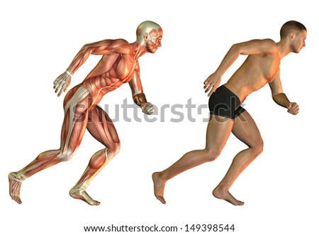 Anatomy and performance study of a man with muscle structure - stock photo