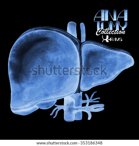 Anatomy collection - X-rays of liver. Watercolor isolated organ  - stock photo