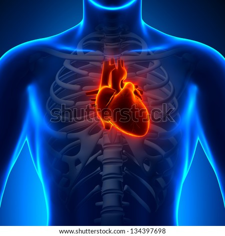 Anatomy Heart - Chest Medical Scan - X-ray concept - stock photo