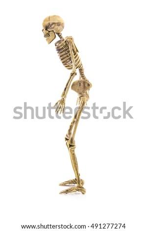 Side View Illustration Human Skeletal Anatomy Stock ...