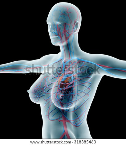 anatomy of a woman on black with clipping path.