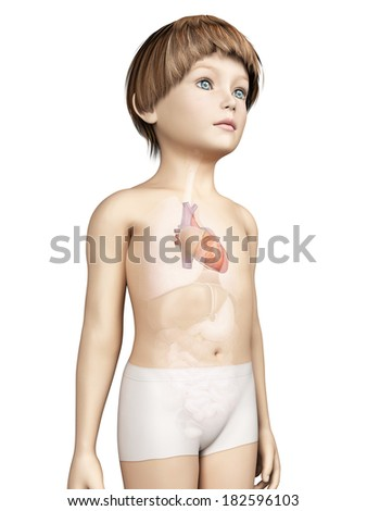anatomy of a young child - heart
