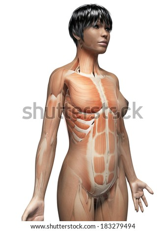 anatomy of an african american woman - muscles