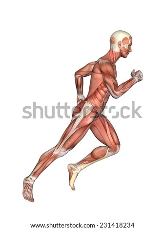 Anatomy of Male in Running Motion: Featuring male figure in running motion with showcasing major muscular groups such as deltoids, triceps, biceps, quadriceps, hamstrings and obliques.  - stock photo