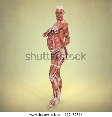 Anatomy Pregnant Woman Stock Illustration 117487816 - Shutterstock