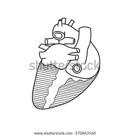 Anatomy heart posterior view stock illustration 370863560 shutterstock anatomy of the heart posterior view ccuart Choice Image