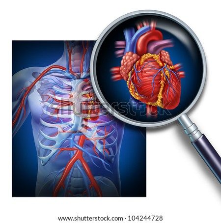 Anatomy of the human heart as a focus and magnification of the circulation and cardiovascular system from a healthy body as a medical health care symbol of an inner vascular organ. - stock photo