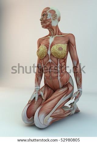anatomy woman medicine study photorealistic renderer human figure kneeling - stock photo
