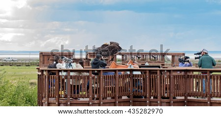 Anchorage, Alaska, USA - June 4, 2016: A bald eagle is release after being rehabilitated at the Potter Marsh Discovery Day 2016 at the Potter Marsh Anchorage Coastal Wildlife Refuge - stock photo