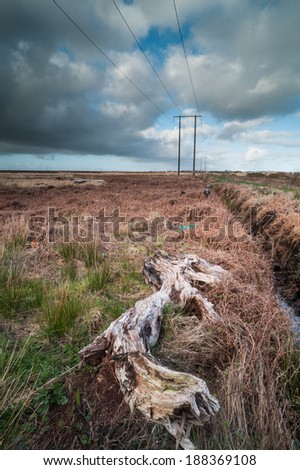 ancient Bog-wood in a rural peat bog field in Ireland - stock photo