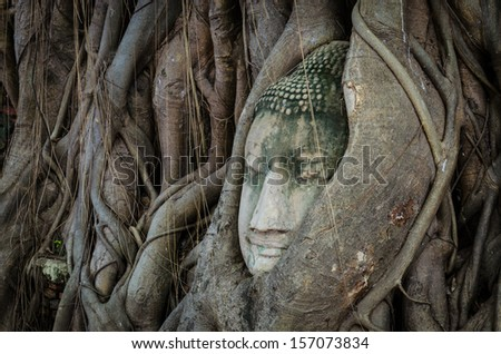 Ancient Buddha's face in a tree
