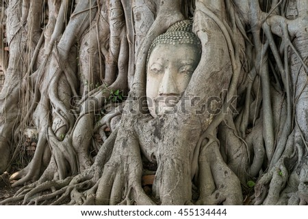 Ancient Buddha Statue in tree roots at Mahatat Temple, Ayuttaya, Thailand. background