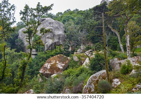 Ancient Forest - Green forest landscape with stones and boulders. - stock photo