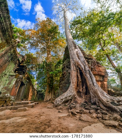 Ancient Khmer architecture. Ta Prohm temple with giant banyan tree at Angkor Wat complex, Siem Reap, Cambodia. Three images panorama - stock photo