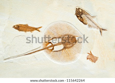 ancient marine fossils in rock - stock photo