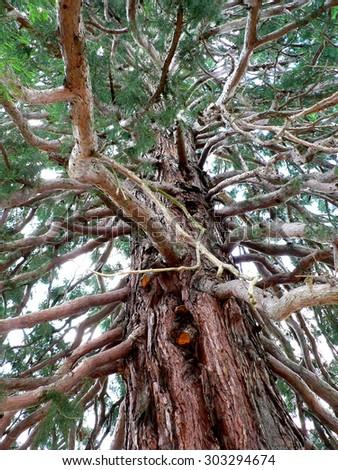oak forest buddhist single men Oak forest vintage.
