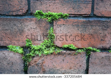 Ancient red brick wall with moss as a background - stock photo